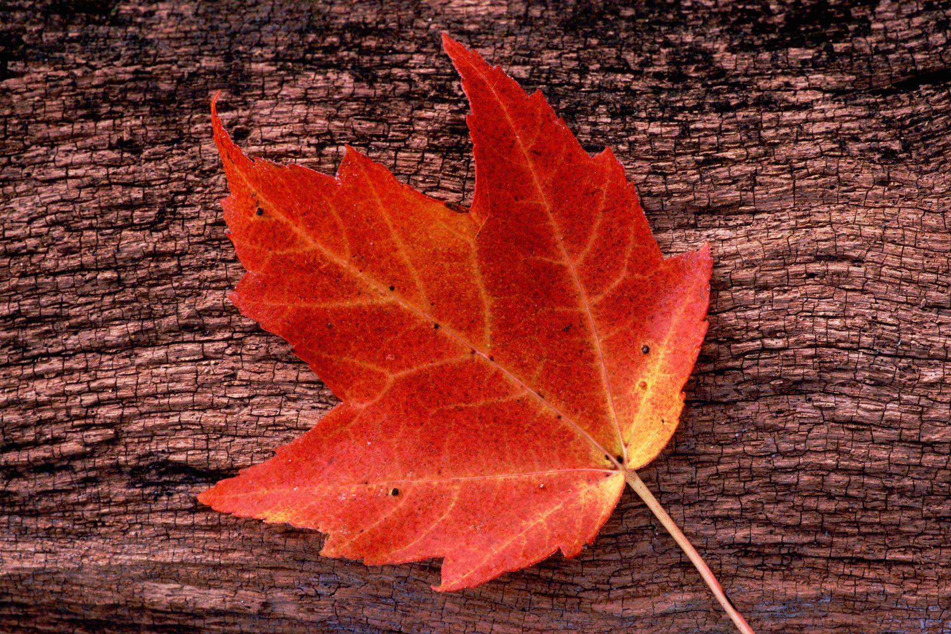 Der Herbst geht ums Haus: Schützen Sie Ihre Immobilie vor Sturm, Kälte & Co.
