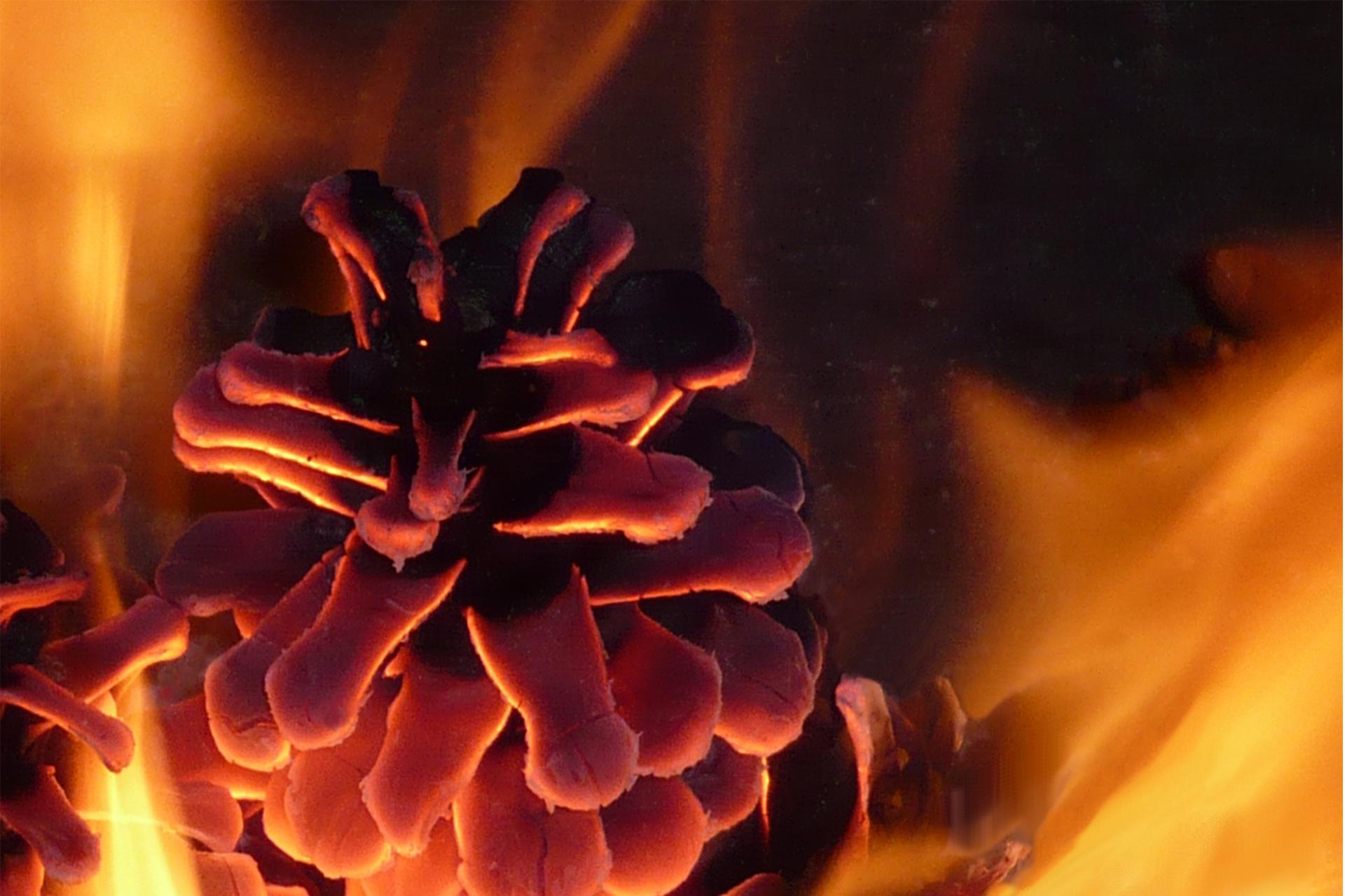 In den Herzen wird's jetzt schön warm… und was ist mit Ihren Heizkosten?